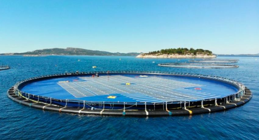 Ocean Sun Floating Solar Panels